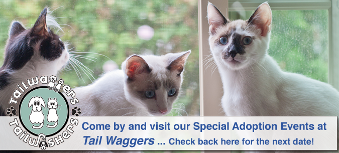 Tailwaggers Special Adoption Events!