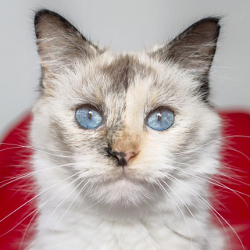 Adopt. Visit with our pets ready for adoption. Come meet your perfect match  today!